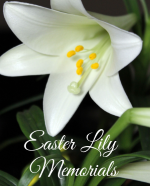 Easter Lily Memorials