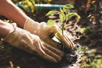Senior Ministry: Gardening as a Way to Connect with Creation