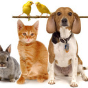 PET BLESSING Saturday, Oct 3 - 10:30 am
