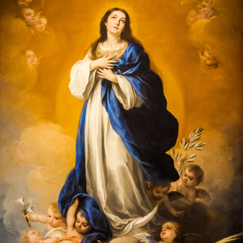 Feast of the Immaculate Conception  <br />Holy Day of Obligation