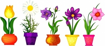 Spring Flower Campaign!