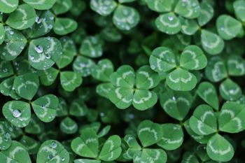 St Patrick's Day Party-CANCELED