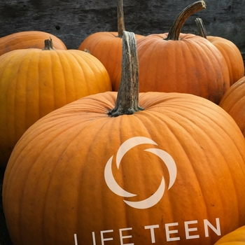 Pumpkin Carvin' - LIFE TEEN