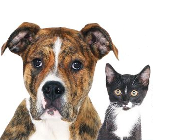 Make Your Pet A Hero: Spencer County 2021 Rabies Clinics Announced