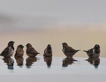 Father of Falling Sparrows