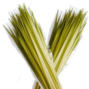 "Help us ""Prep the Palms"" for Palm Sunday"