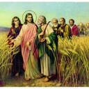 16th Sunday of the Ordinary Time