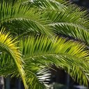 Palm Sunday Masses available online