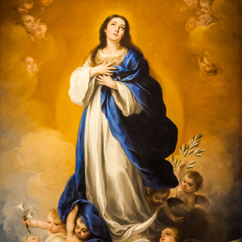The Solemnity of the Immaculate Conception of the Blessed Virgin Mary