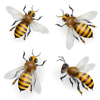 Busy Bees Meeting