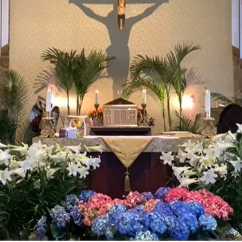 VIDEO - WED Daily Mass