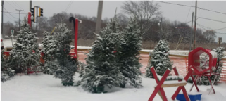 Knights of Columbus Christmas Tree Sale