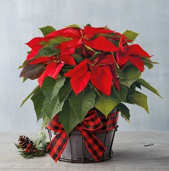 Christmas Flower Donations