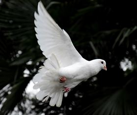 Two Lessons the Holy Spirit Taught Me