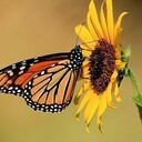 Caring for Creation: Choose to Protect a Pollinator