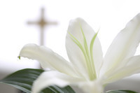 Introduction to Eastertide: The Season of Easter