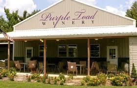 50+ Trivia Night at the Purple Toad