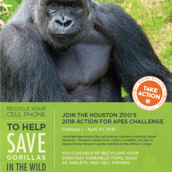 Action for Apes - April 3rd - 13th
