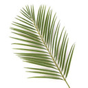 Old Palm Leaves needed