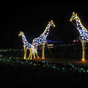 Southwick's Zoo Winter Wonderland