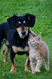 May 2 - Rabies Clinic & Dog/Cat Grooming
