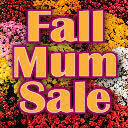 8th Grade Mum Sale Fundraiser