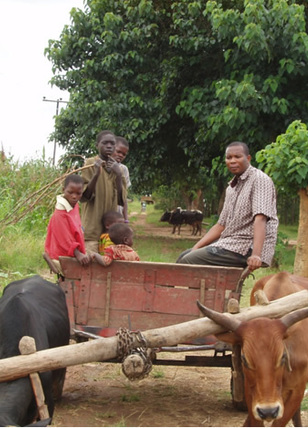 Farming Projects
