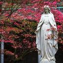 Bishops of U.S., Canada will consecrate their nations to Mary May 1