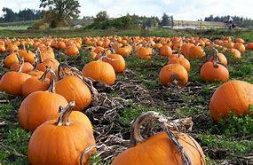 Hope/Joy Outing to Local Pumpkin Patch