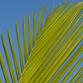 Palm Sunday Mass (Live Streamed)