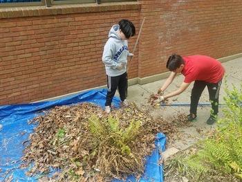 St. Francis Builds Gardens
