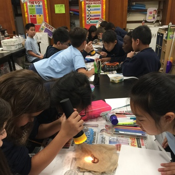 How do earthworms react to light?