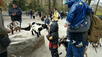 Pre K Learning at the Zoo