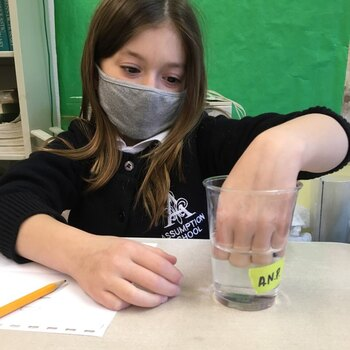 Marbles and Osmosis in 3rd Grade