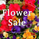Flower Sale Orders Due