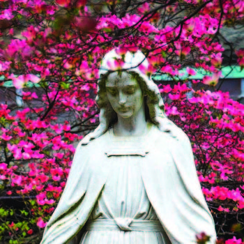Bishops Of U.S., Canada Will Consecrate Their Nations To Mary Friday
