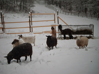 A Cold Winter on the Farm