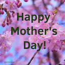 Happy Mother's Day! Pick up a Carnation Saturday, May 9: 5:00PM to 6:00PM
