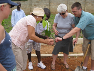 Cocoa plant being planted by Ghana Mission Project crew for Fr. Paul Casa Maria courtyard.