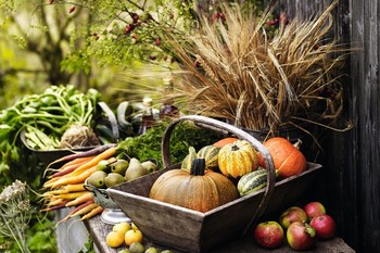 Harvest Festival Mass, Sunday 22nd September, 10.00am