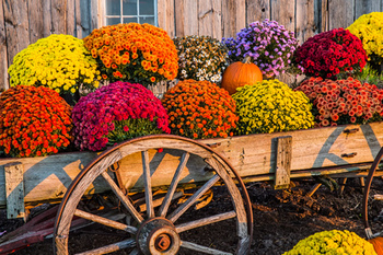 Fall Flower Sale Planned