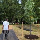 Can Urban Reforestation Help Lower Rising Temperatures?