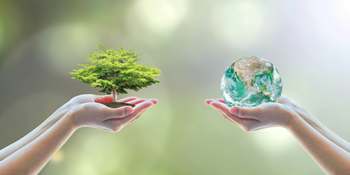"""10 Simple ways to be a """"steward of the Earth"""" in 2020"""