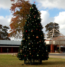 OLDP Knights of Columbus Erect Christmas Tree