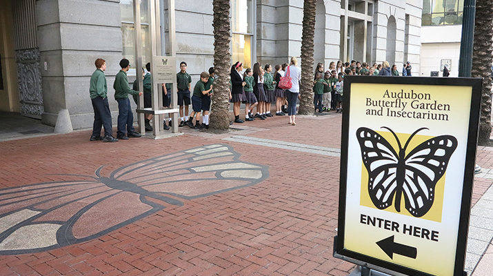 Catholic schools create a buzz at Insectarium