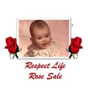 Knights of Columbus Respect Life Roses