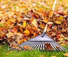 Thanks to Our St. Catherine's Leaf Rakers