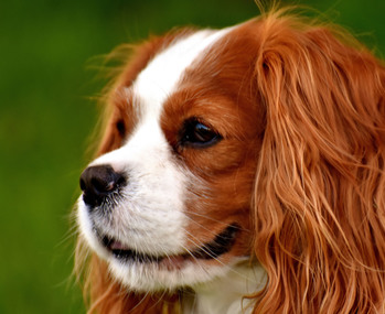 Blessing of the Animals- October 4 at 1 PM