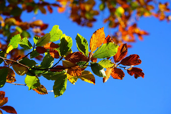 Autumn season is almost here! We are preparing the churches for the fall season