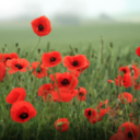 Armistice Day & Remembrance Sunday - 'Lest we forget'